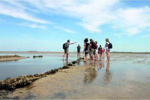 Wattwanderungen und Inselführungen